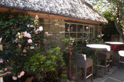 Ivy cottage garden